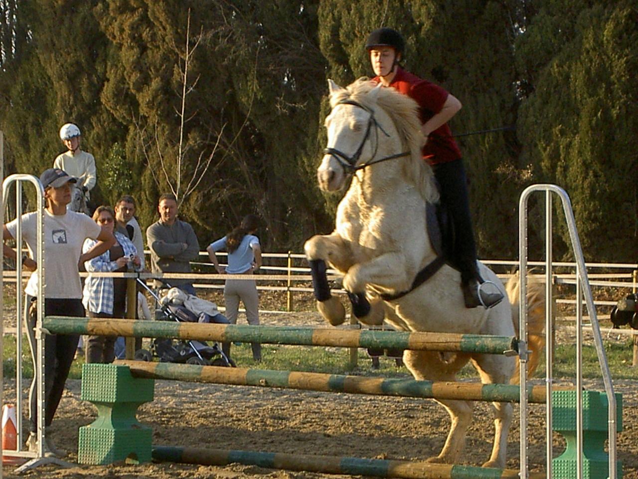 poney saint remy de provence
